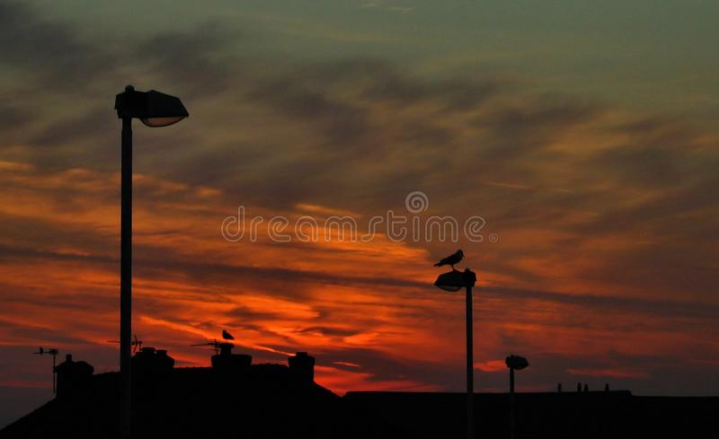 Seagulls Against The Sunrise. Silhouetted birds obligingly pose on lampposts, chimneys and roof aerials against the backdrop of an emerging sunrise over farmland royalty free stock images