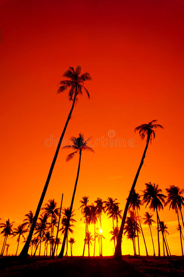 Download Silhouetted of coconut stock image. Image of resort, island - 26686985