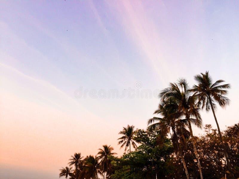 Coconut palms trees under sky royalty free stock photo