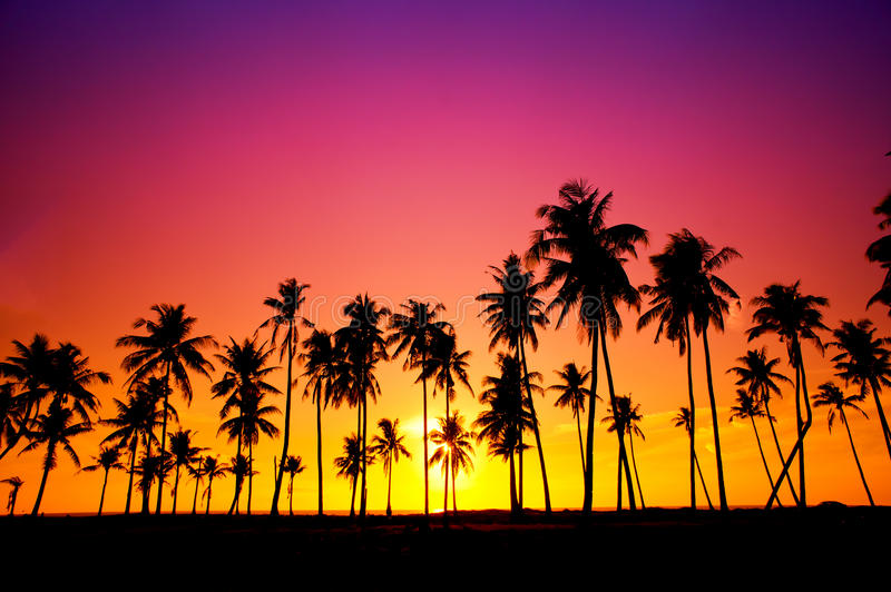 Download Silhouetted Of Coconut Tree Stock Image - Image: 26686965