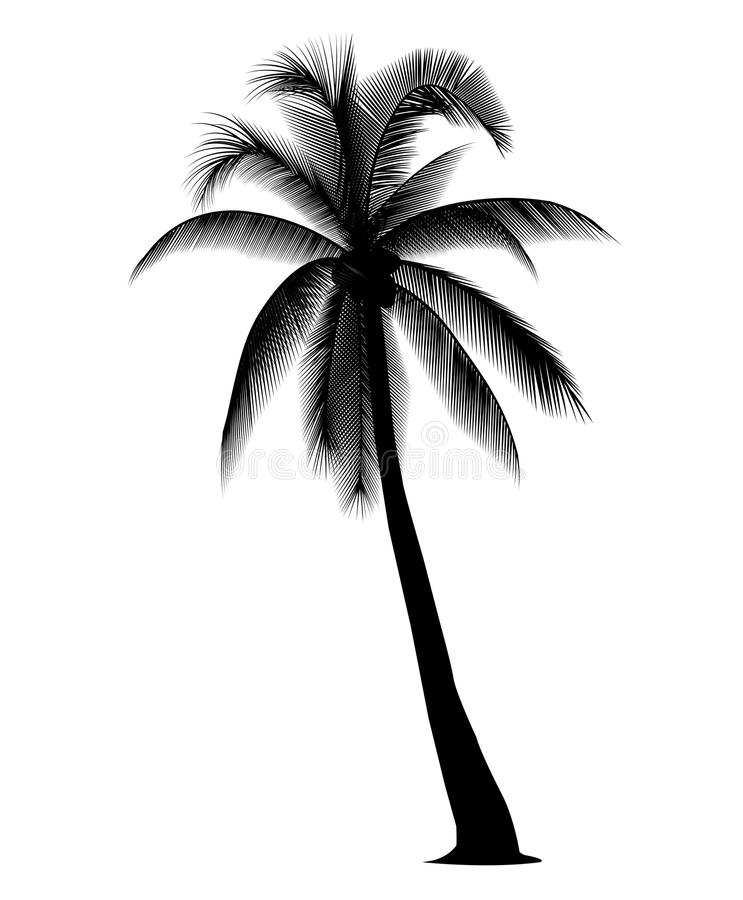 silhouetted coconut tree stock vector illustration of illustration rh dreamstime com palm tree silhouette vector art free vector palm tree silhouette free