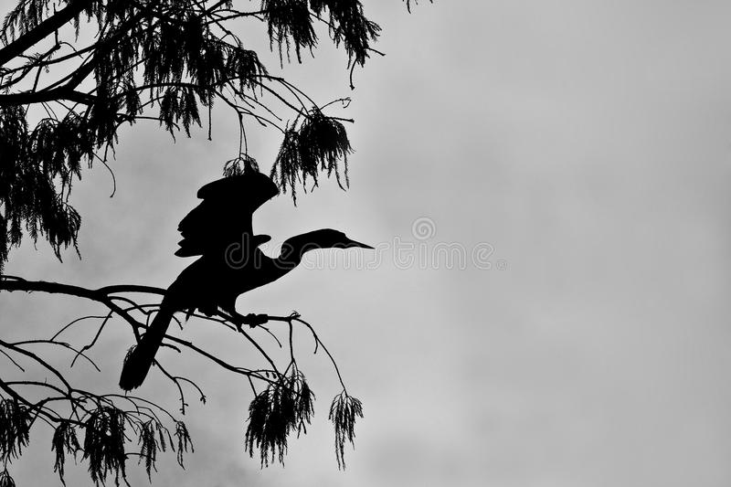 Download Silhoette Of Cormorant Stock Image - Image: 16015831