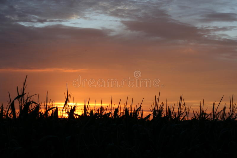Silhouetted field at sunset stock photos