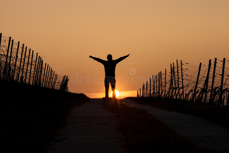 Silhouetted man standing in sunset. In vineyard stock image