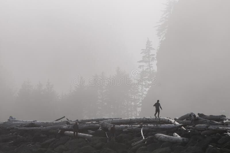 Silhouetted man walks along huge logs of driftwood royalty free stock photo