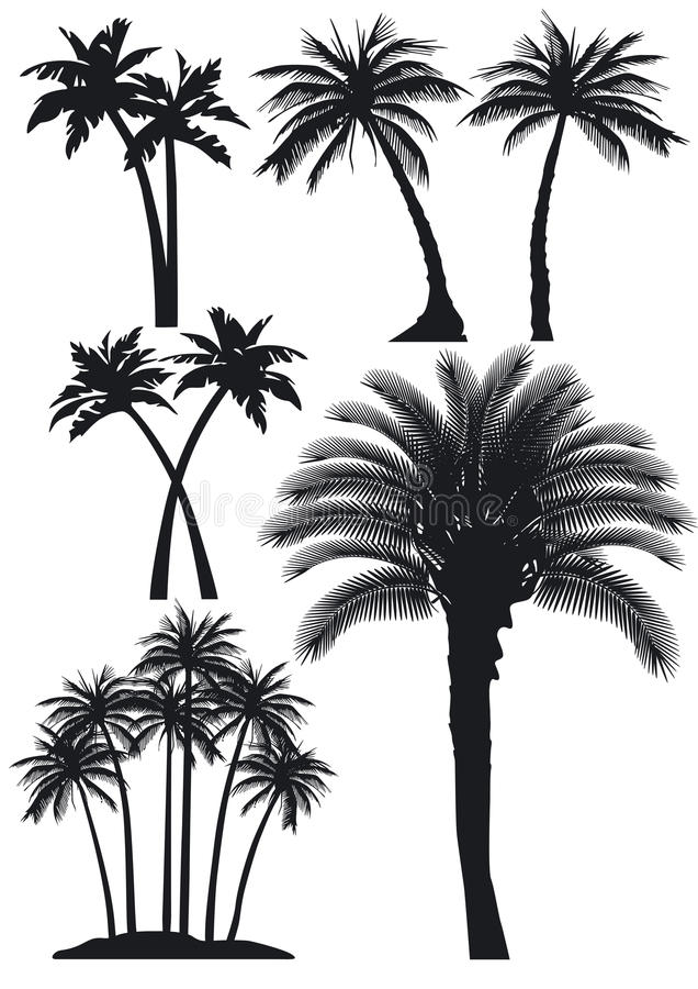 Silhouetted palm trees. Silhouetted set of palm trees isolated on white background royalty free illustration