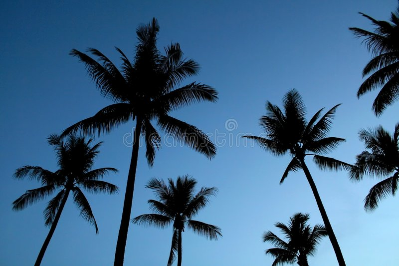 Silhouetted Palm Trees Stock Photos