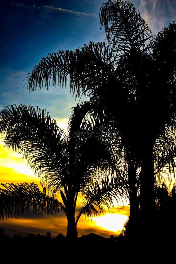 Silhouetted palmträd under solnedgång royaltyfri fotografi