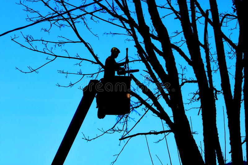 Silhouetted Landscaper at Work. Silhouetted profile view of a landscaper standing in an elevated bucket trimming tree branches with a chainsaw stock images