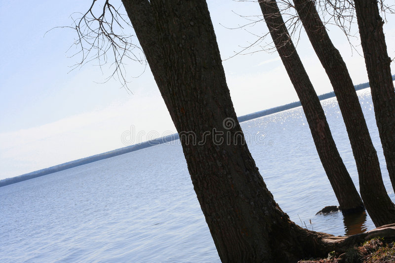 Silhouetted riverside trees stock photography