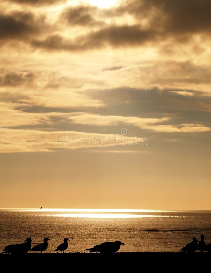 Download Silhouetted Seagulls On Beach Stock Photography - Image: 4854792