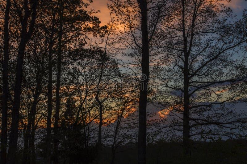 Silhouetted träd, färgrik himmel arkivbilder