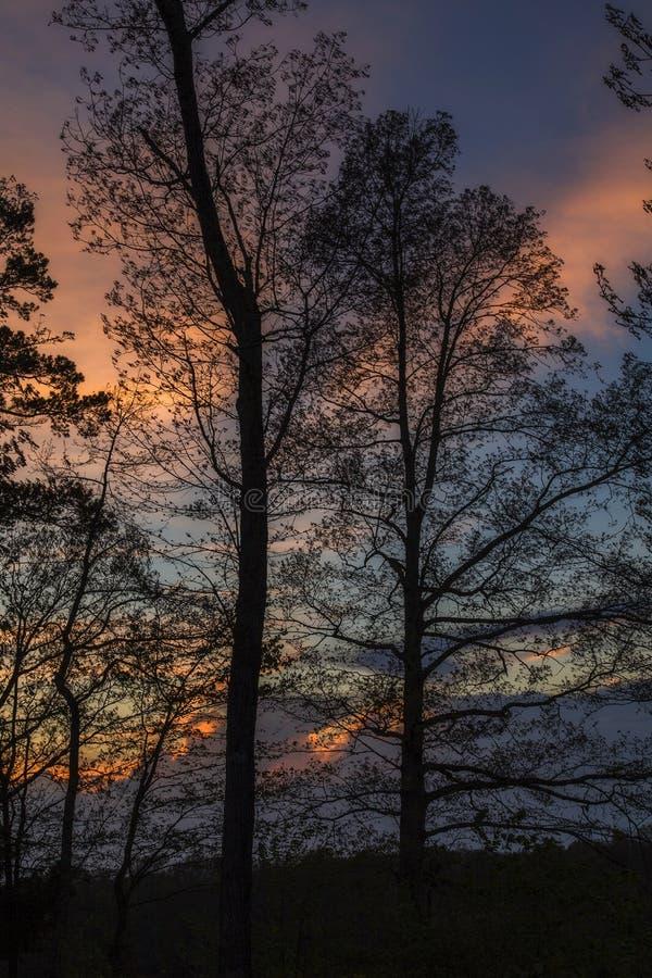 Silhouetted träd, solnedgång arkivbilder
