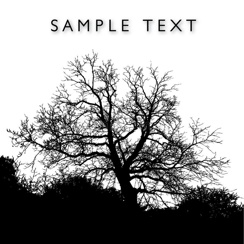 silhouetted tree stock illustrationer