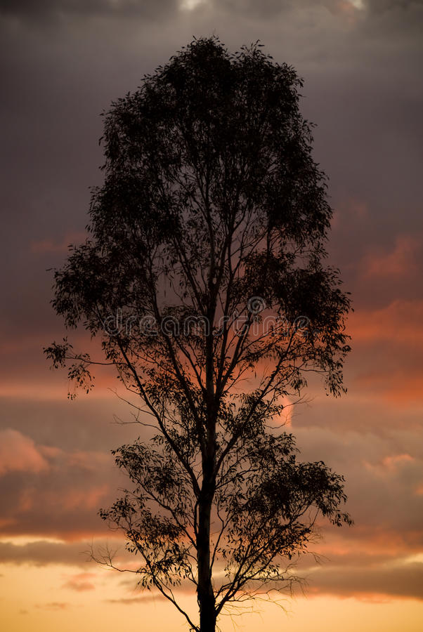 Silhouetted Tree Stock Image