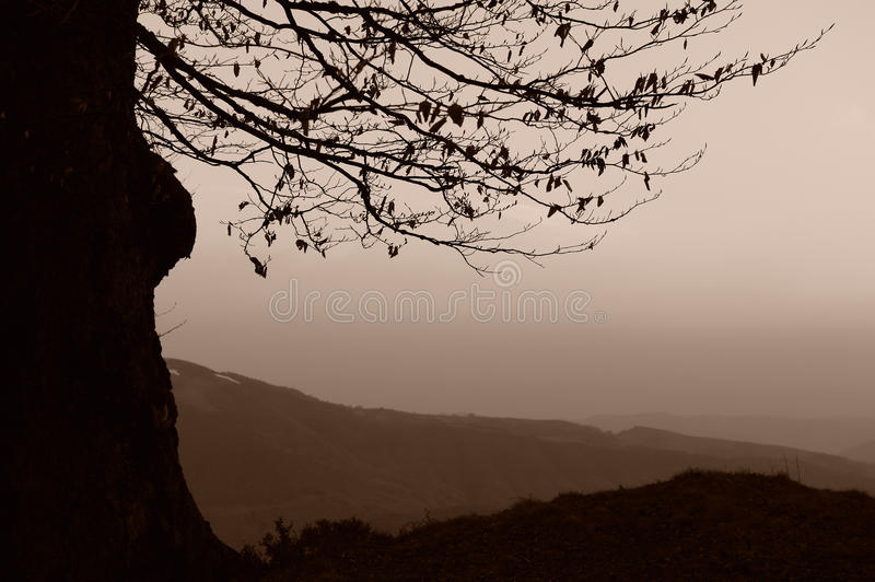 Download Silhouetted Tree In Mountains Royalty Free Stock Images - Image: 14582039