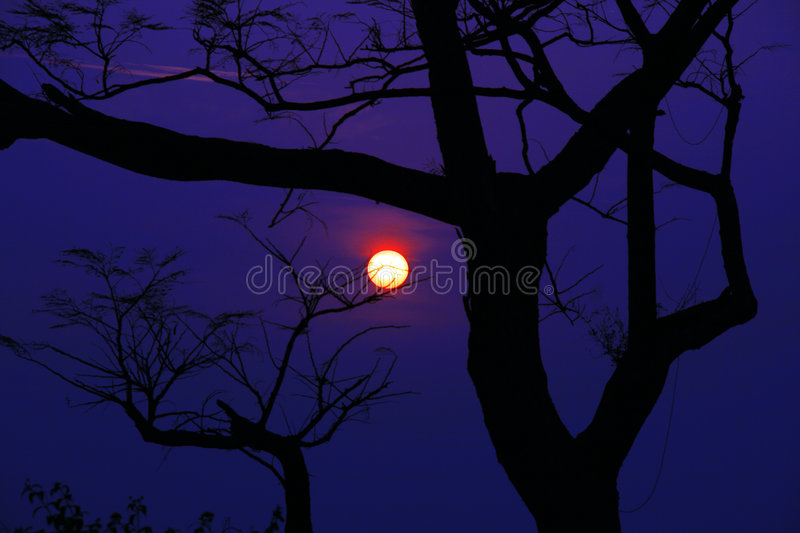 Silhouetted tree with Surreal scenic sunset. Silhouetted sunset with rare surreal colors at twilight dusk royalty free stock image