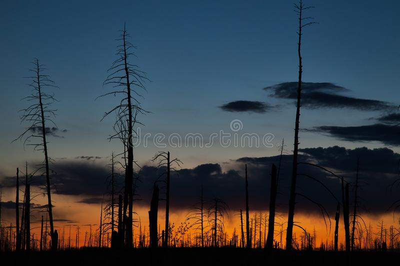 Silhouetted Trees against an Evening Colourful Morning at Sunset. USA stock image