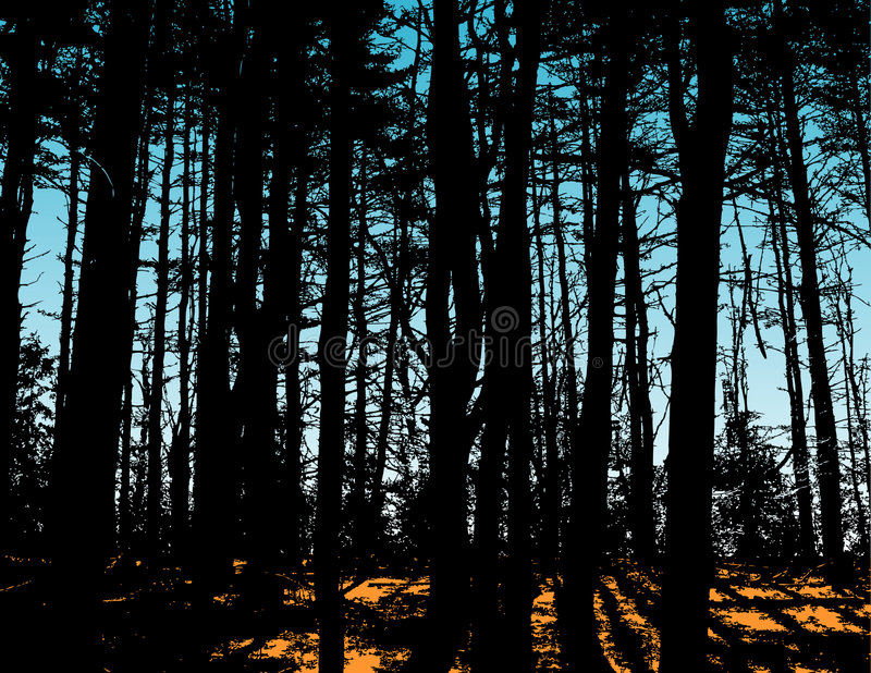 Silhouetted trees in forest. A view of trees silhouetted in a forest royalty free illustration