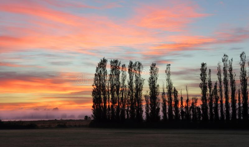 Silhouetted trees royalty free stock photo