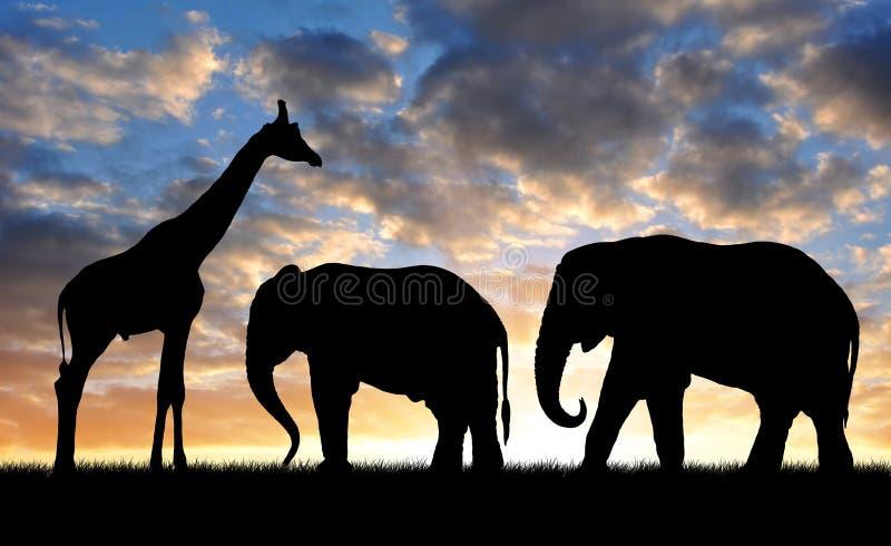 Silhouetteelefant och giraff arkivbilder