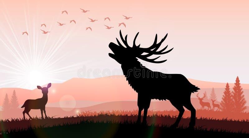Silhouetteer herten en een kangoeroe het voeden in de heldere zonsondergang stock illustratie