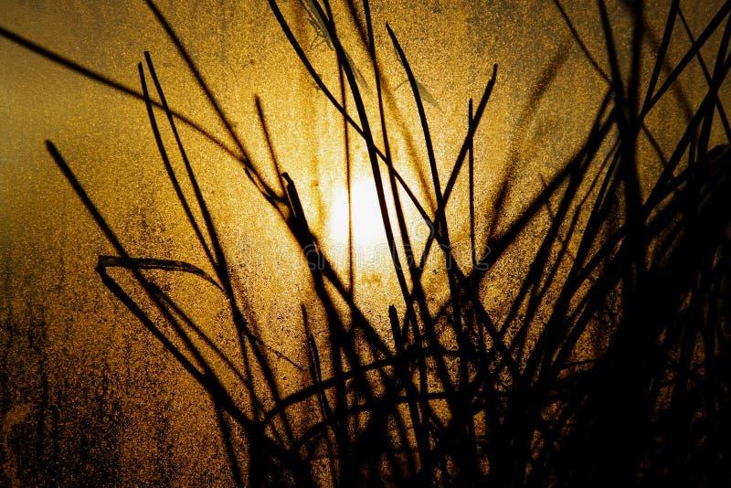 Silhouetten van bloempotten met bladeren in de serre onder helder geel die de herfstzonlicht door het venster wordt gezien stock afbeeldingen