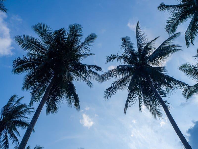 Silhouetten van bomen tegen de blauwe hemel en multi-colored wolken stock afbeelding