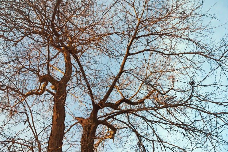 Silhouetten van bomen zonder bladeren tegen blauwe hemel royalty-vrije stock foto
