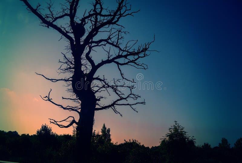 Silhouetten van boom bij zonsondergang stock afbeeldingen