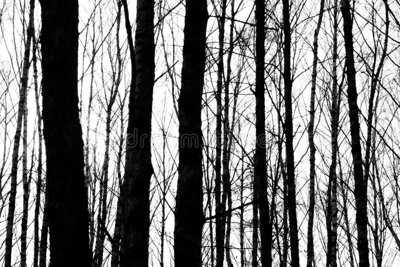 Silhouetten van boomboomstammen royalty-vrije stock foto's