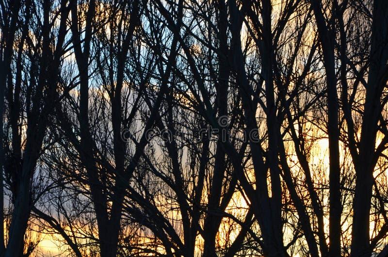Silhouetten van boomstammen en takken van bomen zonder gebladerte tegen de avondhemel beeld royalty-vrije stock foto