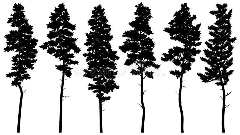 Silhouetten van de lange ceder van pijnboombomen stock illustratie