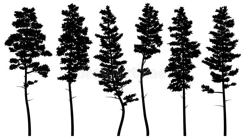 Silhouetten van de lange ceder van pijnboombomen vector illustratie