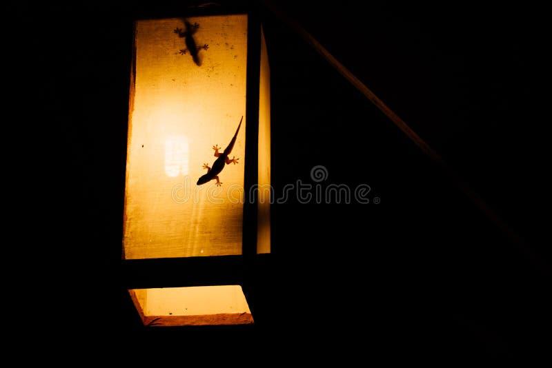 Silhouetten van geckoes in het gele licht van een document toorts in Azië De gekko is een schaduw royalty-vrije stock afbeelding