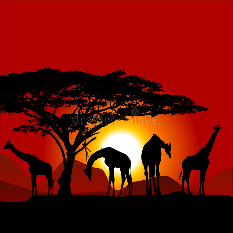 Silhouetten van giraffen op Afrikaanse zonsondergang