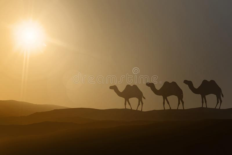 Silhouetten van het lopen van kamelen royalty-vrije stock afbeelding