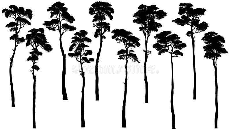 Silhouetten van lange bomen met bladerenpijnboom, ceder, sequoia royalty-vrije illustratie
