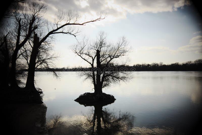 Silhouetten van naakte bomen in een rivier - de foto van de Mysticusstemming maakte wi royalty-vrije stock foto's