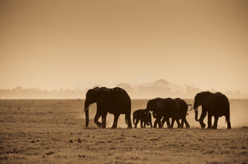 Silhouetten van olifanten stock afbeelding