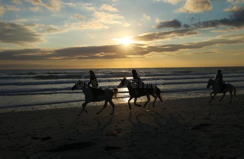 Silhouetten van paarden op het strand van de oceaan bij zonsondergang stock afbeeldingen
