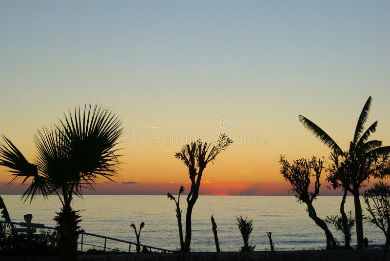 Silhouetten van palmen tegen de zonsondergang royalty-vrije stock afbeeldingen