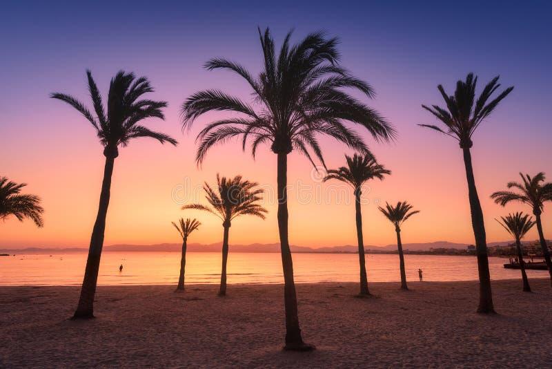 Silhouetten van palmen tegen kleurrijke hemel bij zonsondergang stock foto