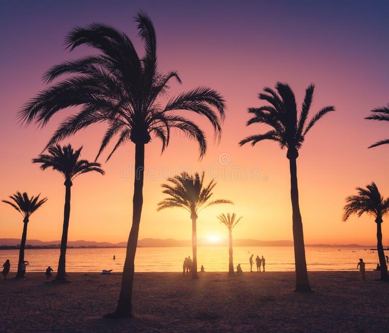 Silhouetten van palmen tegen kleurrijke hemel bij zonsondergang royalty-vrije stock fotografie