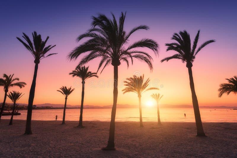 Silhouetten van palmen tegen kleurrijke hemel bij zonsondergang royalty-vrije stock afbeelding