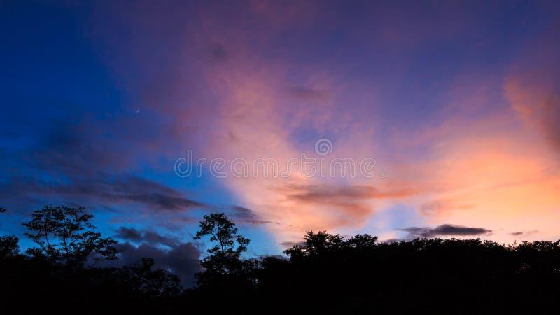 Silhouettes лес стоковые фотографии rf