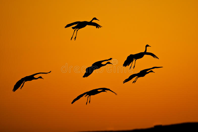 Download Silhouettes stock photo. Image of grus, evening, legs - 22546832