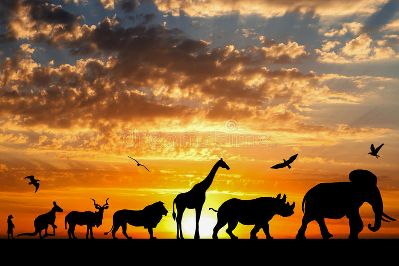 Silhouettes of animals on golden cloudy sunset stock images