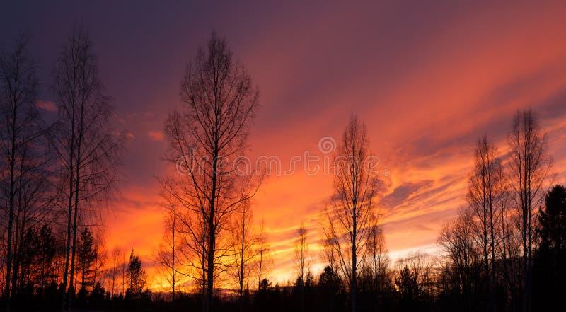 Silhouettes ardentes de coucher du soleil et d'arbres photo stock