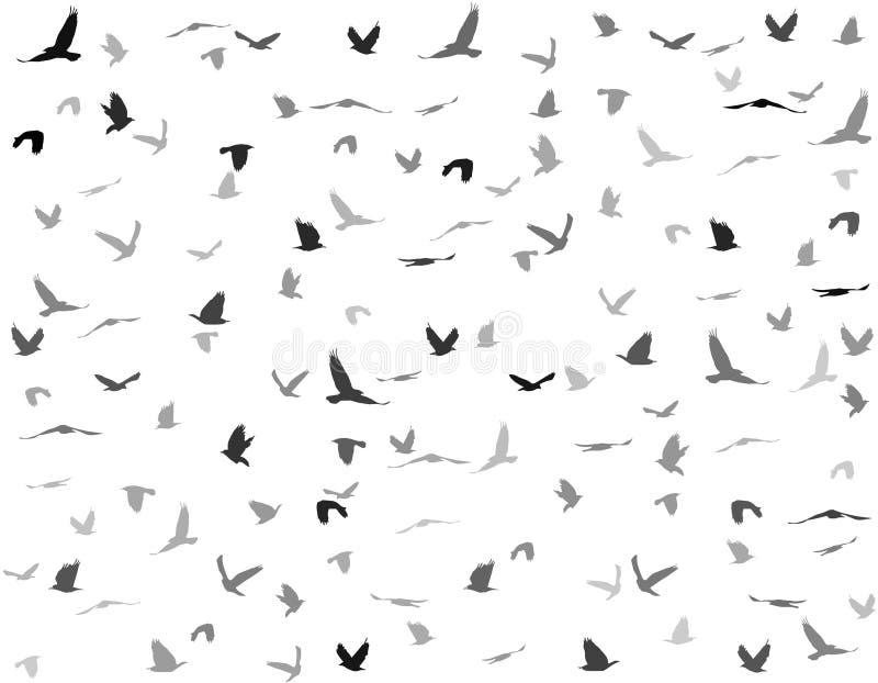 Silhouettes av fåglar royaltyfri illustrationer